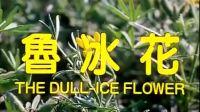 台湾经典老电影(鲁冰花)黄坤玄 于寒主演