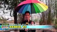 【拍客】楚雄州多年大旱喜迎本年度最大降雨量久旱逢甘霖大快人心