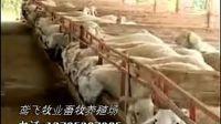 小尾寒羊,波尔山羊养殖技术视频