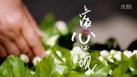 上海心发现——花香篇