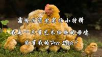 霜冷の萌宠实拍小特辑: 我是一只有艺术细胞的母鸡!