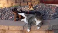 猫咪之歌 猫咪养活一窝小狗