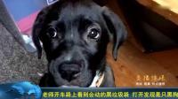 老师开车路上看到会动的黑垃圾袋 打开发现是只黑狗