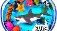 介绍斑马及海龟玩具