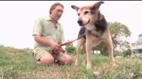 主人舍不得20岁老狗安乐死 每天都抱着爱犬去湖里做水疗!