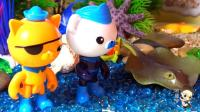 海底小纵队帮助小海豚小蓝找妈妈 32