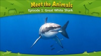 Little Fox小狐狸英语动画  认识动物1  大白鲨  趣味英文学习