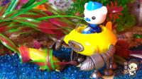 33 海底小纵队帮助锤头鲨逃离奇怪的水草群