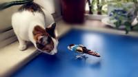 宠物拾趣/猫咪的战争