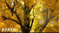 儿童诗歌-秋天的大树配乐朗诵视频