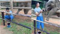 小象频频撒娇求搭理 驯象员工作难专心
