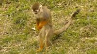 合肥野生动物园《松鼠猴》_雁飞晨光