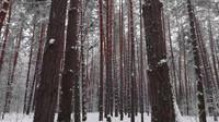 4K冬季森林美景徒步拍摄