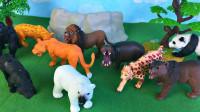 动物园动物玩具展示