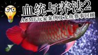 周鱼说鱼 血统与养法2 ACME玩家案例及龙鱼赛事回顾 第八期