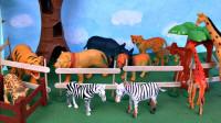 动物园里的动物玩具