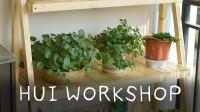 【晖木工坊】DIY一个松木花架