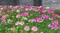 广州荔湾赏花