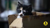 丑猫黄富贵成长日记(1):小奶猫初到新家,如何尽快消除恐惧心理
