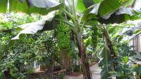 北京呀路古热带植物园(二)