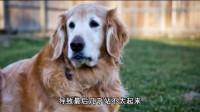 分别一年后13岁老狗和女主人相见 重逢画面让人感动流泪!
