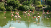 越南芽庄游(4-2)珍珠岛游乐园