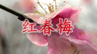 合肥紫蓬山,梅园写生第二篇《红春梅》_雁飞晨光