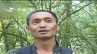 云南景东:影像记录西黑长臂猿家庭添新丁