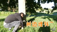 新西兰旅游,中国游客树边埋钱,猜猜埋了多少