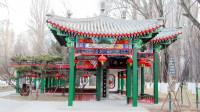 西宁市人民公园寒鸦戏水