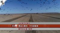 黑龙江黑河:万鸟迎春来