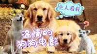 """催泪巨弹!四部关于""""狗狗""""的电影,请备好纸巾观看!"""