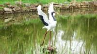 游览盐城丹顶鹤自然保护区--男博万视觉