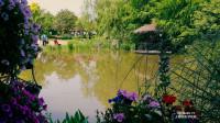 【原创】浦江梦花源 荟萃庭院园艺艺术 于花里胡哨中找寻美丽