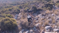狗狗进入山坡,显得很兴奋,不一会就有一个家伙往山上狂奔,狗狗们迅速追踪