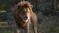真人版《狮子王》最新电视版预告