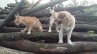 【 萌宠日常 】01 超萌可爱小猫咪与小狗玩耍 猫咪趣事 家有萌宠欢乐多 轻松时刻 动物搞笑
