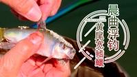 鱼乐无限19-25期:晨曲浮钓黄尾宽鳍鱲