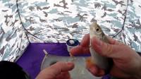冰钓 冒险 钓鱼