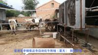 182 夏津东李镇张法寺自动化奶牛场《夏天》同恩摄像 201908070636