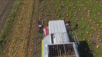 现代农业机械收获南瓜及南瓜田施肥