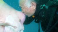 """大鱼和老人相识20多年,这样的""""跨界友谊"""",鱼的记忆真不止7秒!"""
