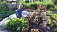 农业新技术土豆从播种到收获