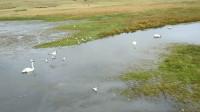 金秋游新疆 国家级自然保护区天鹅湖