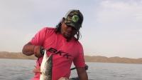 《未明之地》第17集 探钓新疆库尔勒大狗鱼 沙漠绿洲感受异域路亚乐趣