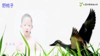 金波儿童诗歌《野鸭子》——郭语嫣朗诵配乐视频