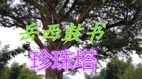 刘纯松岳西鼓书《珍珠塔》第三集