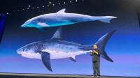 期待不做手机研究鲨纹的罗永浩能收获成功:老人与海发布会VLOG
