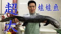 500元买一头超大娃娃鱼,跟鳄鱼一样,大铁锅一炖肉质非常鲜美