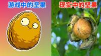 Pvz 游戏中的植物vs现实中的植物